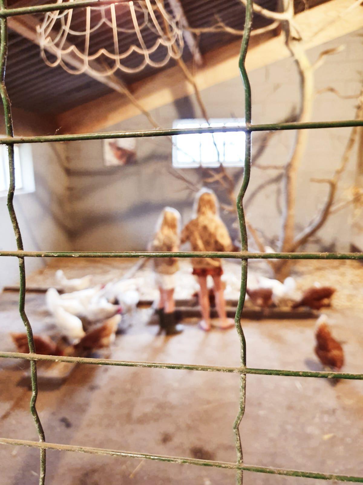 de Kleine Wildenberg- boerderij vakantie - dieren voeren
